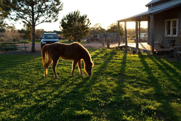 Small pony grazing on lawns of Excitations Yelta studio. Photo by Excitations Mildura photographers.
