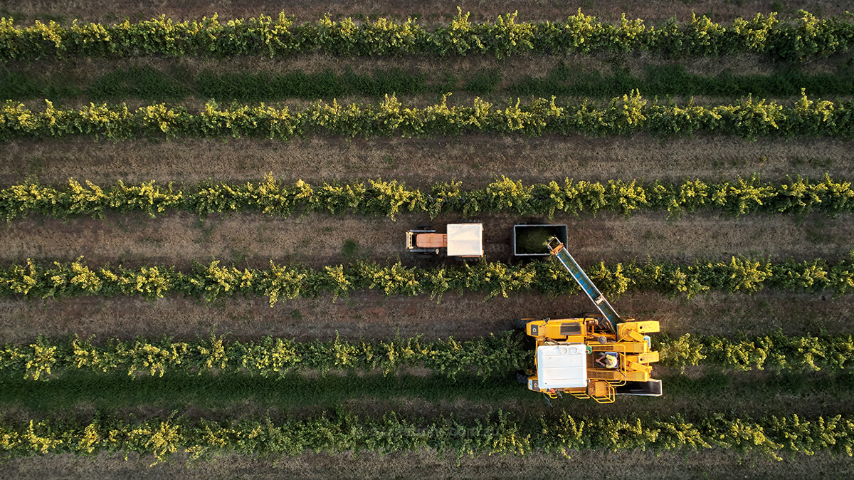aerial photo of mechanical grape harvester by Excitations, photographers Mildura